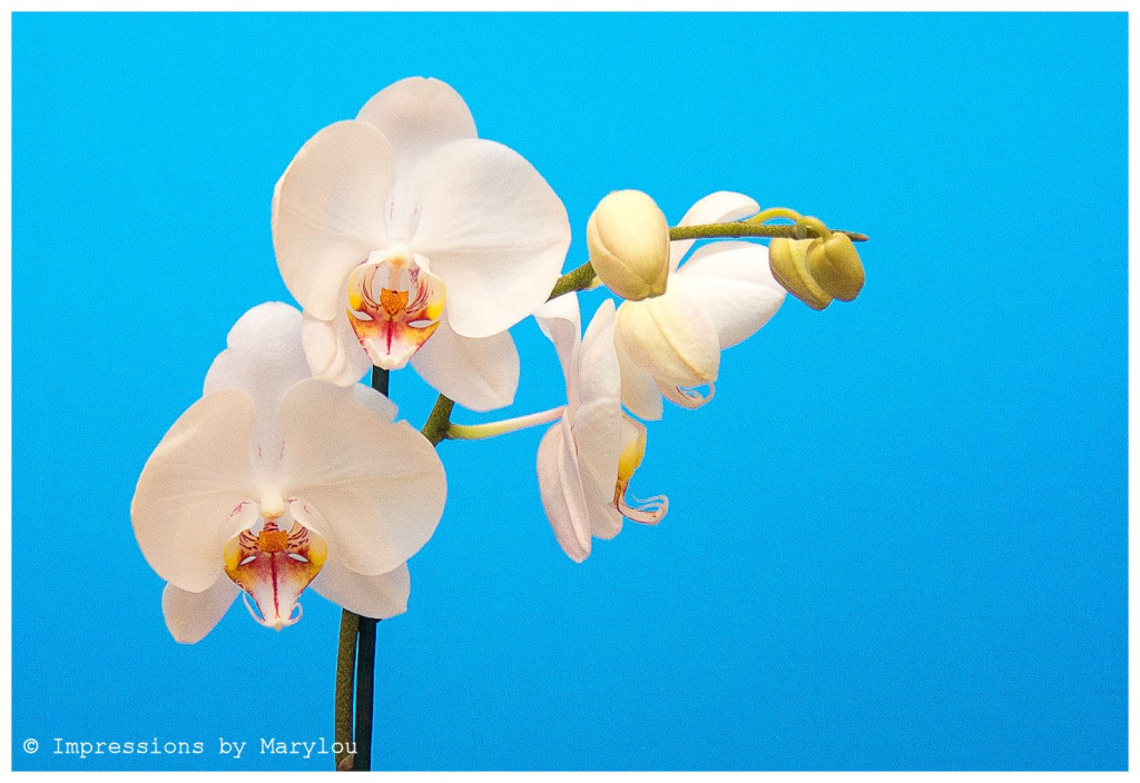 Orchids-13 b